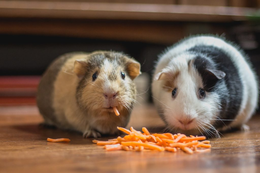 Two hamsters eating grated carrots on a wood floor.