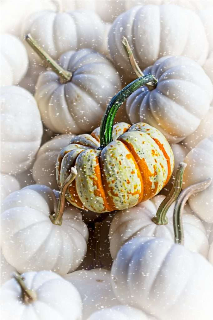 White and orange pumpkins in the snow